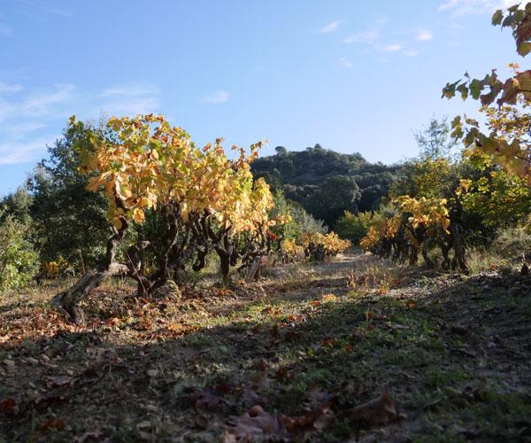 Récolteur de truffes noires éco-responsable dans la Drôme Provençale