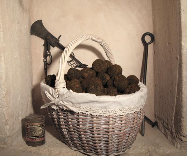 Producteur de truffes noires dans la drôme Provençale